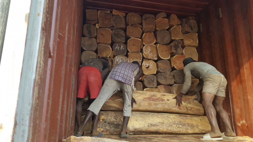 Kosso wood Madrin APA wood image