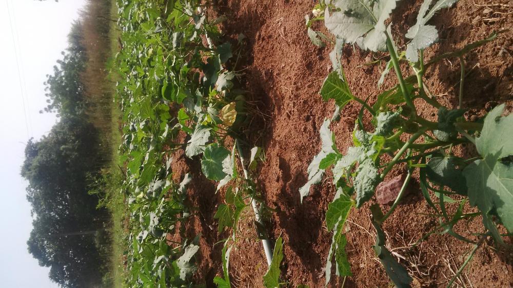 farm machineries and irrigation design image